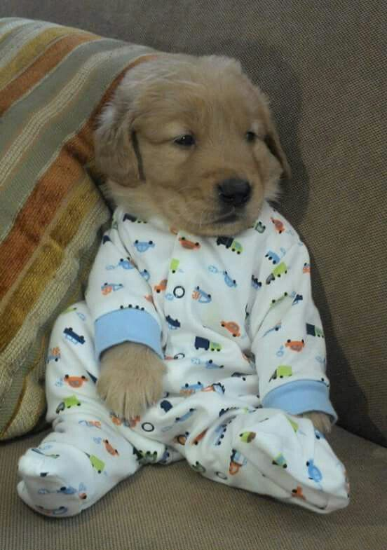 What Could Possibly Be Better Than Puppies in PJs?!?!